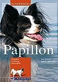 Papillon: Charakter, Erziehung, Gesundheit