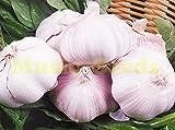 100 piezas semillas de ajo morado semillas bonsai sanos Vegetable Seeds Planta verde Decoración Hogar y Jardín