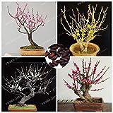 AGROBITS 5 PC/porción Bonsai Wintersweet Chimonanthus Fragrans Praecox Hoja caduca arbusto casero de los bonsais de la Planta de Bricolaje Jardín RARA Mezcla Bonsái: