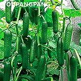 Shopmeeko 200 Stücke Gurkenpflanzen Extrem frühe japanische Sorte für den offenen Boden Wachsende Pflanzen Gemüse Hausgarten Bonsai Pflanzen Flowe