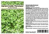 Seedeo® Gartenmelde Mondseer (Atriplex hortensis) 300 Samen BIO