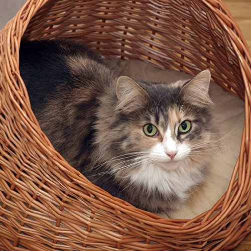 katzeninfo24.de 2-9-18 GalaDis Katzenhöhle Weide mit hellem Kissen / Katzenkorb / Katzenbett, sowohl für Katzen als auch kleine Hunde