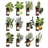 Kit aromathérapie - Lot de 12 huiles essentielles 10ml 100% pures et naturelles. Qualité France