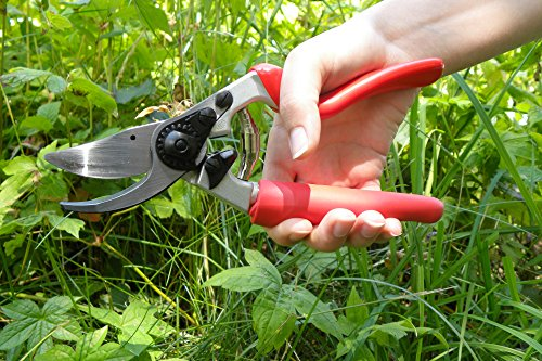 Felco has been manufacturing secateurs since 1945 and the Felco FEL7 Model 7 Classic Secateurs is a great example of what their decades of experience can produce. The secateurs are brilliantly designed with great features such as revolving handle, shock absorption system, and sap groove. It is super comfy to use and delivers precise cuts up to 25mm without hurting your roses.