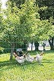 Filet volailles non Electrifiable  112 cm 25 m, double pointe