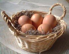 美野里たまご 加賀の朝日 トレイ詰め 25個 箱入り 新鮮卵