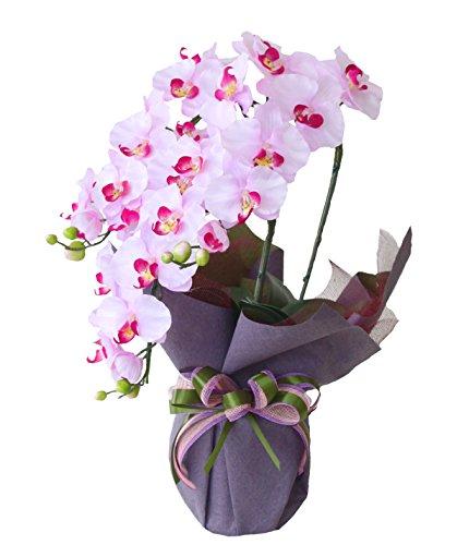 胡蝶蘭の花言葉はあなたを愛しています