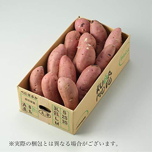 紅はるか 熊本県 大津産 JA菊池 秀品 B等級 M~2Sサイズ 約2kg べにはるか 芋 さつまいも