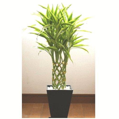 観葉植物は結婚祝いに人気で予算5000円以下でプレゼント可能