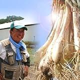 風味絶佳.山陰 鳥取県産特別栽培 田中さんの北条砂丘らくだらっきょう1kg(根付き土付き)