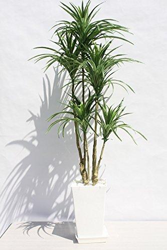 観葉植物を退職するナースにプレゼント