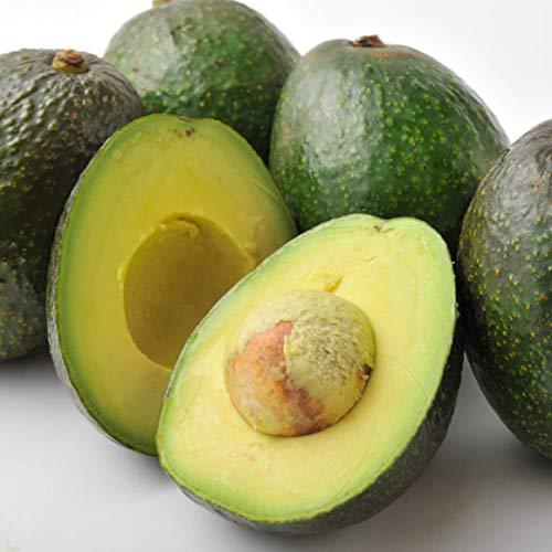 南国フルーツ メキシコ産 アボカド 12玉業務用向け まとめ買い