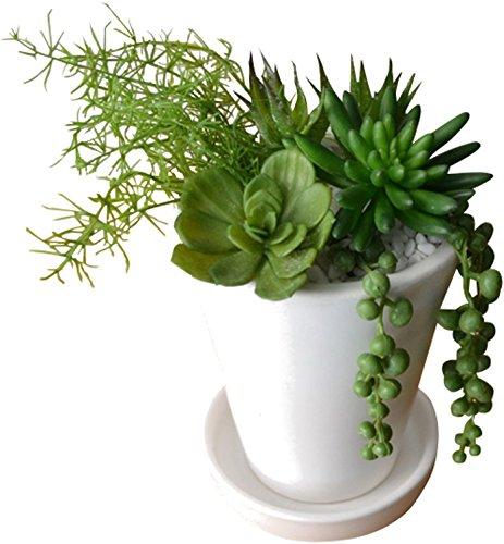 部屋をおしゃれにする観葉植物をプレゼント