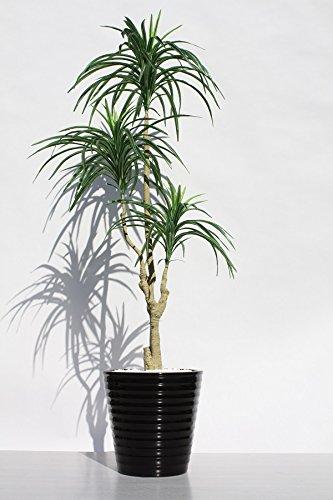 観葉植物を父親の誕生日にプレゼント