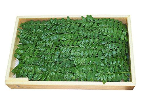 和歌山県産 木の芽 秀 1箱