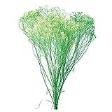 大地農園 プリザーブドフラワー モリソニア(20g入り) 白/グリーン DO03300-017