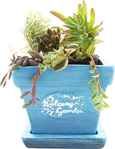スリーキューブ 鉢 暮らし良い品 テラコッタ 植木鉢 スクエアバンドポット M ブルー 13×13×11cm