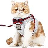 災害の時も一緒だニャン!猫と共に避難するための災害対策
