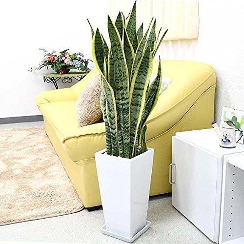 癒しの空間に変える観葉植物をプレゼント