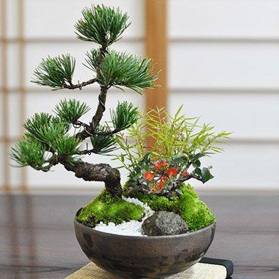 モダン松竹梅の盆栽は定年する父へのギフトに人気