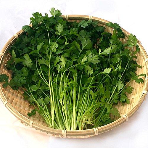 千葉県産 パクチー 生野菜 鮮度保持フィルム包装 200g クリックポスト