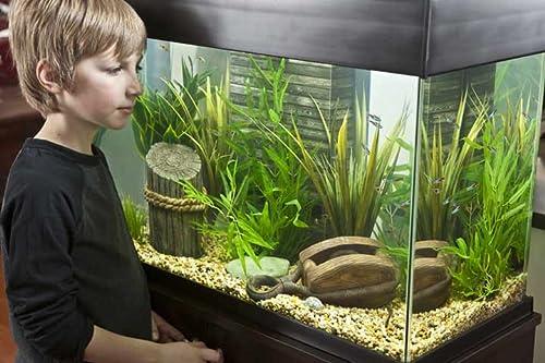 Boy and tank