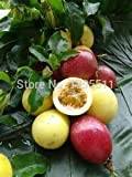 Loss Promotion! 100 rare fruit passion fruit seeds, fruit seeds for home garden planting sementes tree seeds