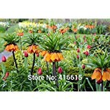 ! LOSS PROMOTION SALE! 100 Crown Imperial Seeds Fritillaria Imperialis Premier Seeds Easy To Grow Home Garden Ground Cover Plant Seed + Mystery Gift