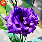 100 Seeds / Pack New Arrival! Eustoma Seeds Perennial Flowering Plants Potted Flowers Seeds Lisianthus Seeds