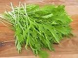 Mustard Mizuna Great Heirloom Vegetable 600 Seeds
