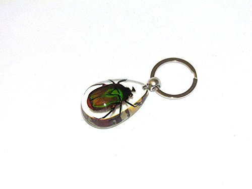 NEW Green Rose Chafer Beetle Keychain