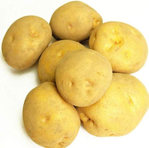 キタアカリ/じゃがいも 5kg 無農薬栽培