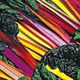 150 Mixed Colors NORTHERN LIGHTS SWISS CHARD (Perpetual Spinach) Beta Vulgaris Cicla Vegetable Seeds
