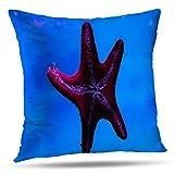 Lshtar Throw Pillow Covers, Starfish Underwater Sea Life Abstract Animal Animals Aquatic Beautiful for Sofa Cushion Covershort Plush Design Decoration Home Bed Pillowcase 18 x 18 Inch [Vinyl]