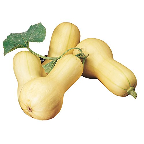 Burpee Butterbush Winter Squash Seeds 40 seeds