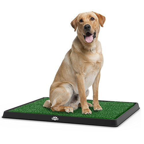 Artificial Grass Bathroom Mat for Puppies and Small Pets- Portable Potty Trainer for Indoor and Outdoor Use by PETMAKER- Puppy Essentials, 20' x 25'