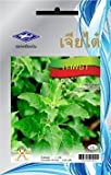 Holy Basil (2400 Seeds) Seeds - 1 Package from Chia Tai, Thailand