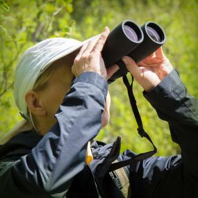 Nikon Binocular For Scenery