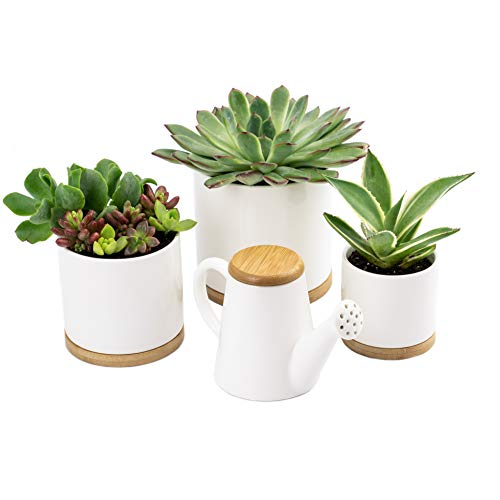Ceramic Planters by Oasis Plant Pots - 3X Small White Planter Pots with Bamboo Trays and Matching Watering Can! Ceramic Pots for Plants, Indoor Flower Pot, Mid Century Modern Planter for Succulents