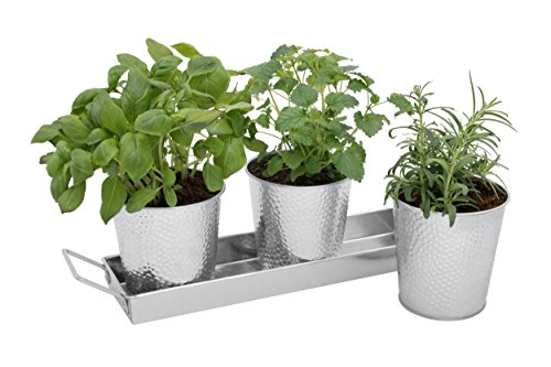 Windowsill Herb Pots by Saratoga Home - Set of 3 Galvanized Indoor Planters and Tray - Also Perfect for Orchids, African Violets and Succulents