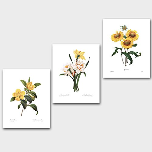 Vintage cute and popular botanical wall art sets floral wall decor set of 3 yellow flower prints sunflower decor daffodil botanical art redoute unframed mightylinksfo Gallery