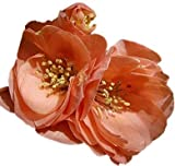 """Cameo Japanese Flowering Quince - 2 1/2"""" potted Chaenomeles japonica 'Cameo' - 6""""- 12"""" Tall Healthy Shrub/Bush - 3 Pack by Growers Solution"""