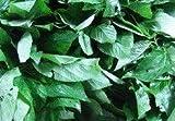 Saluyot Seeds (also known as Jute Leaf Mallow, Jew's Mallow, Egyptian Spinach, Melokhiya, Molokhia, Mulukhiyah, Corchorus, Nalta, and Bush Okra)