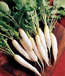 Radish White Icicle Great Heirloom Vegetable by Seed Kingdom Bulk 12,000 Seeds