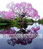 100/bag rare pink Paulownia Seeds (princess tree or empress tree)--impressive and add beauty to your gard 95%+ germination