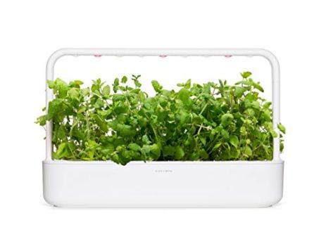 Click-and-Grow-Smart-Garden-Apple-Mint-Plant-Pods-3-Pack