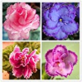 promotion African Violet flower seeds rare garden bonsai Perennial Herb flower seed variety complete mixed 24 colors 200pcs/bag