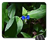 Mouse Pad - Asiatic Dayflower Commelina Communis Wildflower Wild