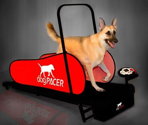 dogPACER LF 3.1 Folding Fitness Dog Treadmill For Dogs Up to 179 lbs by dogPACER