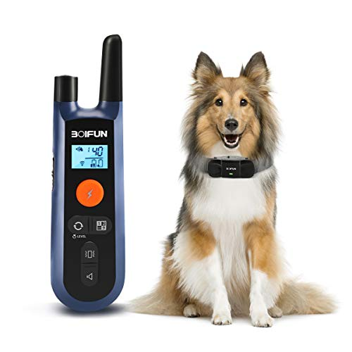 Dog Training Collar w/Remote